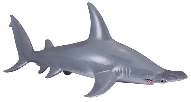 Žralok kladivohlavý