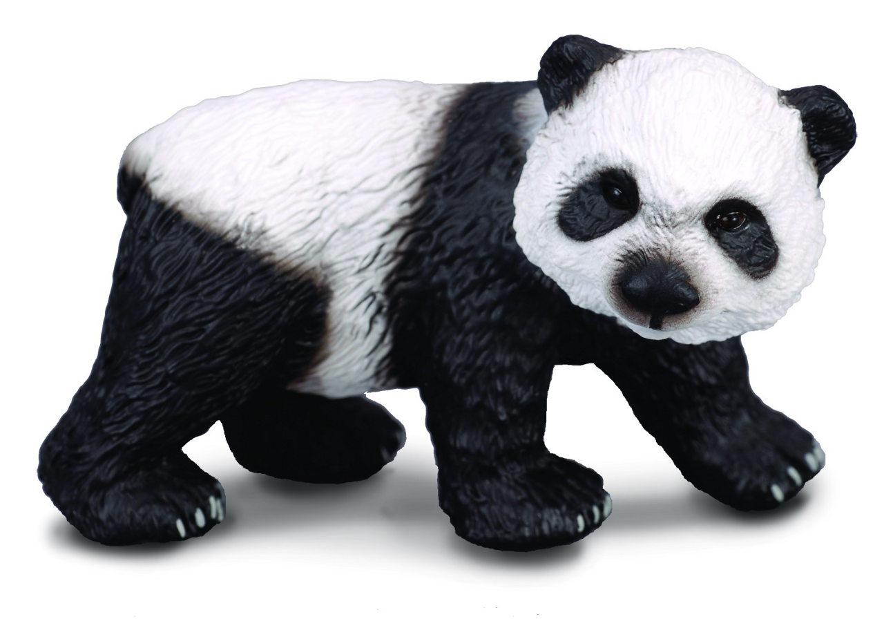 Panda veľká - mláďa
