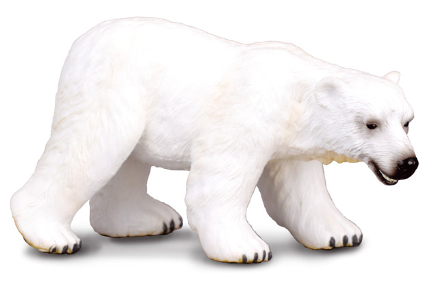 Medveď polárny