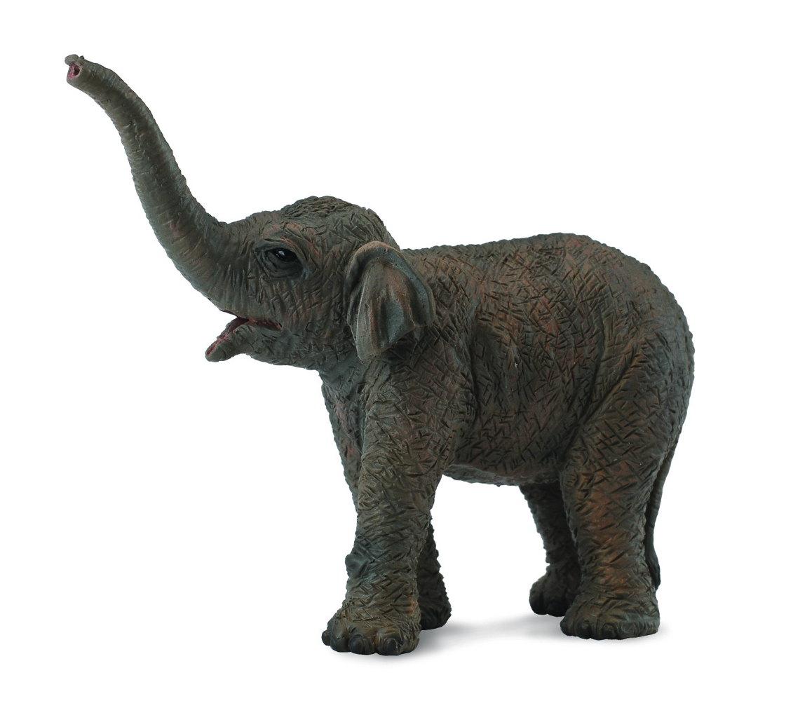 Slon ázijský - sloníča