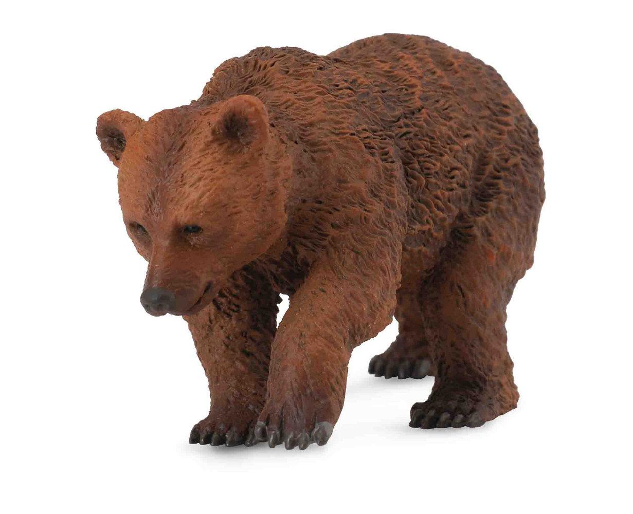 Medveď hnedý - mláďa