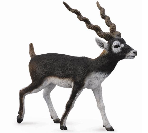 Antilopa jelenia